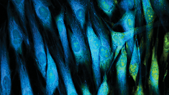 the latest in live cell imaging