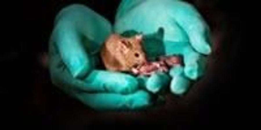 Mouse Pups with Same-Sex Parents Born Using Stem Cells and Gene Editing