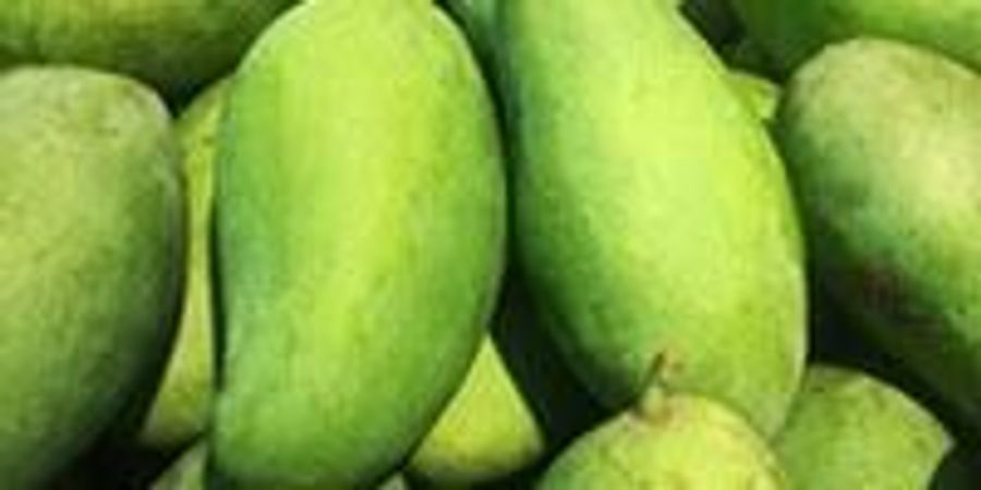 Green Mango Peel: A Slick Solution for Oil Contaminated Soils