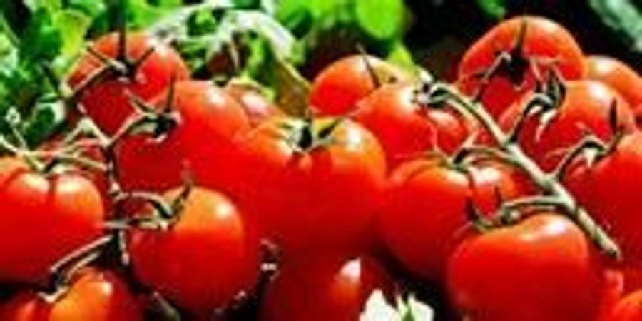Tomatoes 'Mixing Chemical Cocktails': Early Detection of Disease Resistance in Food Crops