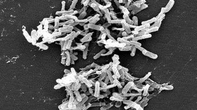 How Hospitals Are Fighting Against C. difficile