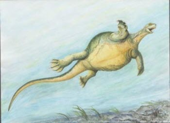 fossil-turtle