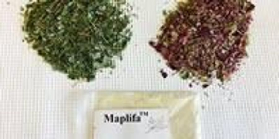 Maple Leaf Extract Could Nip Skin Wrinkles in the Bud