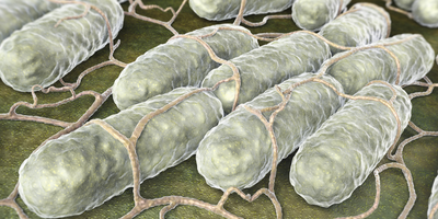 Salmonella Causing Bloodstream Infections in Central Africa Resistant to Nearly All Drugs