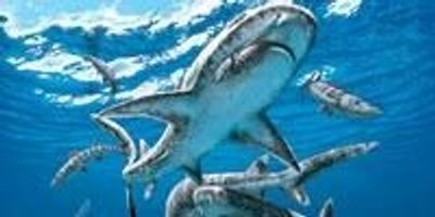 The End-Cretaceous Extinction Unleashed Modern Shark Diversity