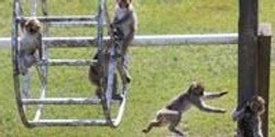 Scientists Discover Neurodegenerative Disease in Monkeys