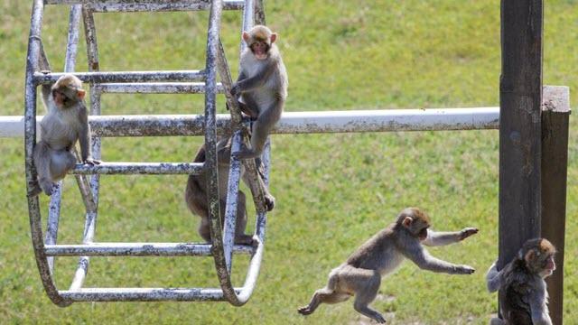 neuro-disease-monkeys
