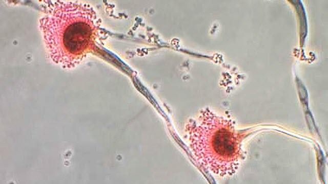 fatal-fungus