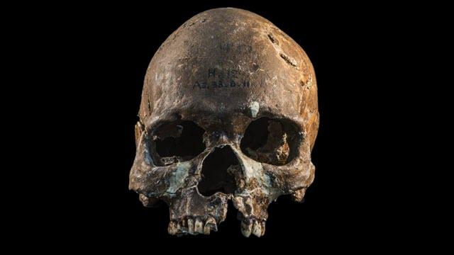 asia-skull