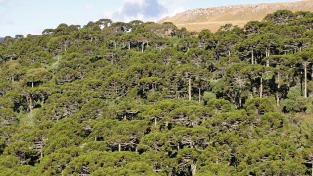 monkey-trees