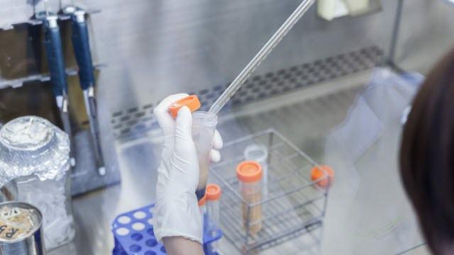 malaria research