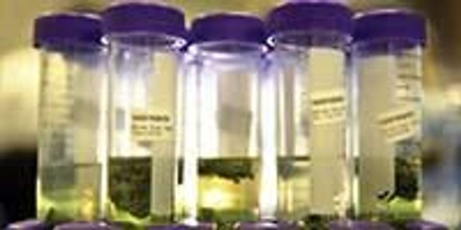A Bright Future for Cannabis Testing Services