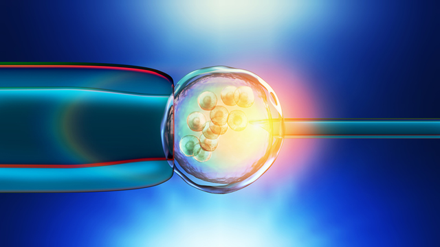 IVF, embryo selection