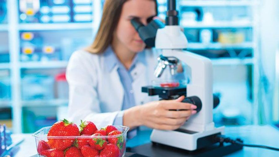 Food Science: Testing for Microbes, Pesticides, and Fakes