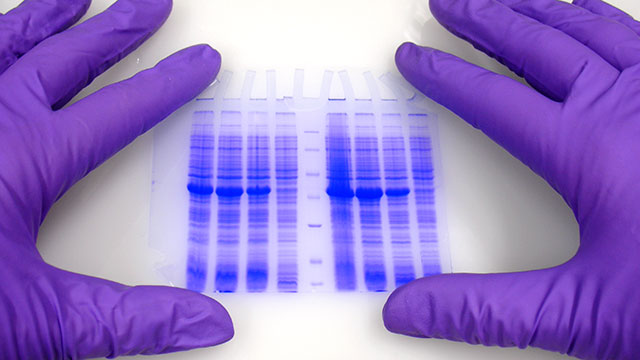 which electrophoresis products are right for your lab?