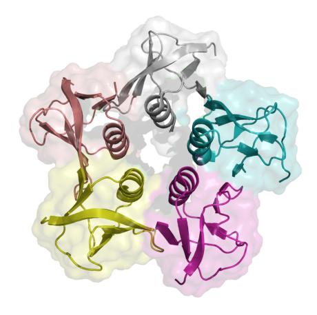 A 3-D ribbon model representing a protein subunit of the Shiga toxin