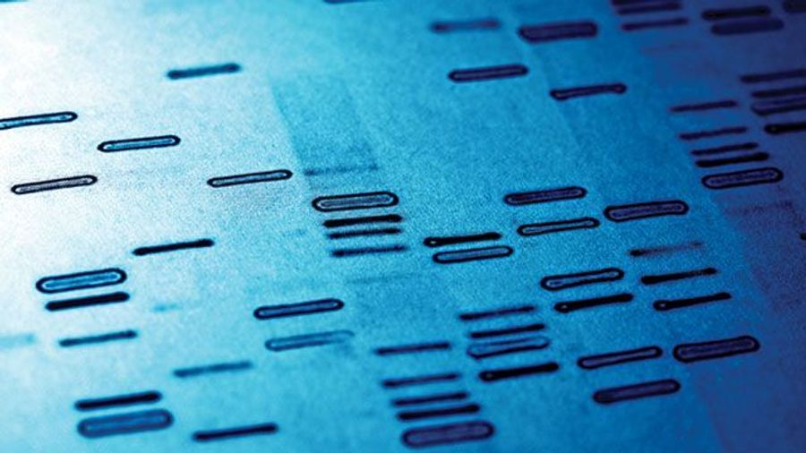 Next-Gen Sequencing Overcomes Limitations in Forensic Genomics