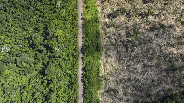 Recently deforested land in the Amazon