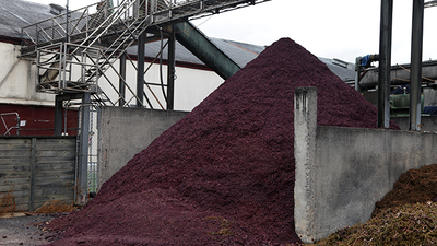 From Landfill to Lipstick: Grape Waste as a Cosmetic and Food Ingredient