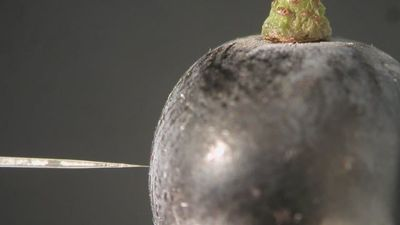 Discovery Shows Wine Grapes Gasping for Breath