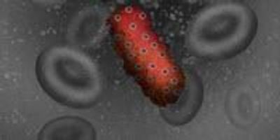 Scientists Find Single Letter of Genetic Code That Makes African Salmonella So Dangerous