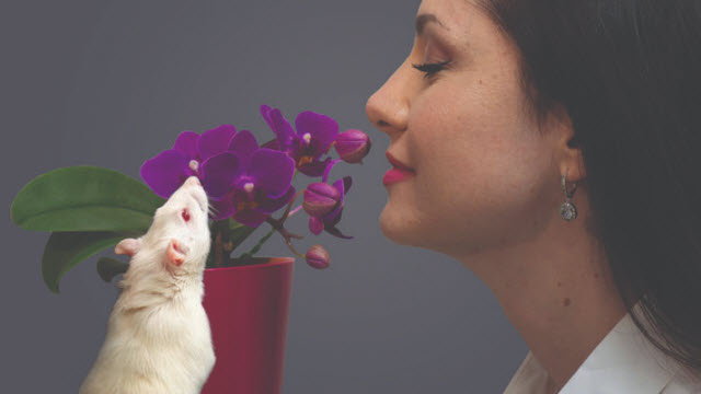 human and rat smelling flower