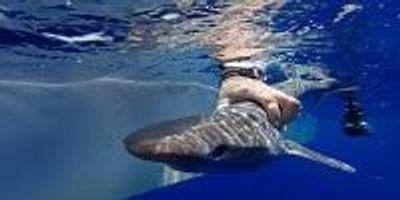 New Shark Species Confirmed