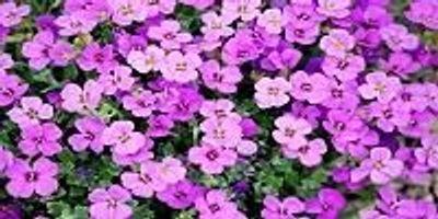 When Did Flowers Originate?
