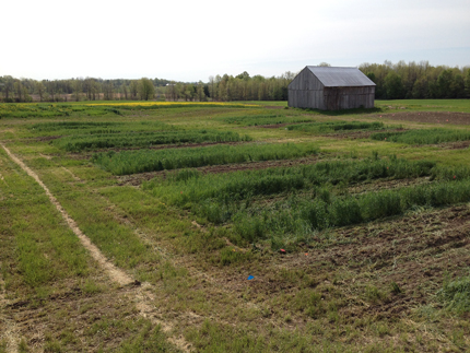 Tillage and manure incorporation treatment plots