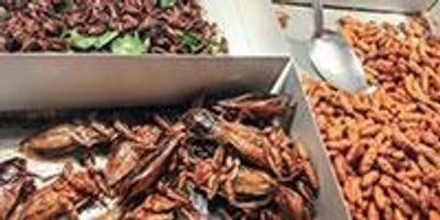 Eating Insects Might Seem Yucky, but They Are Nutritious and There Is No Reason You Can't