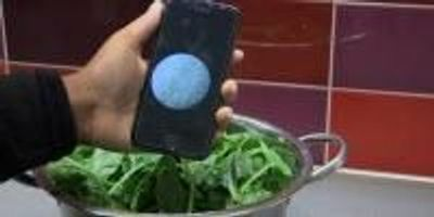 Food Scientists Are Developing a Low-Cost Tool for Detecting Bacteria in Food, Water