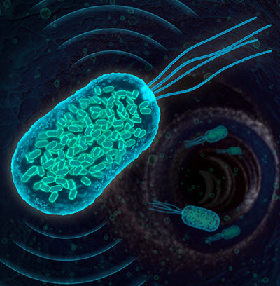 Bacteria containing gas-filled protein nanostructures