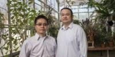 Greenhouse Technology Could Be the Future of Food