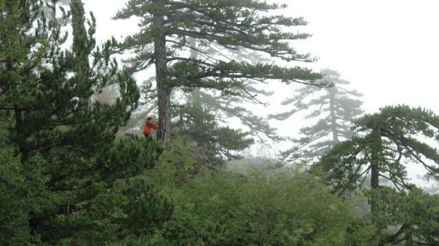 Trouet Cores Old Bosnian Pine