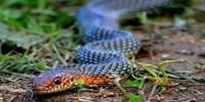 Expert Unlocks Mechanics of How Snakes Move in a Straight Line