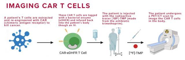 Imaging CAR T Cells