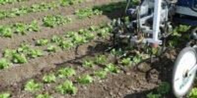 Robotic Weeders: Coming to a Farm near You?