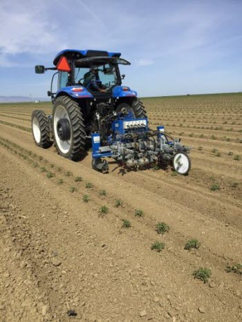robotic weeder in a tomato field