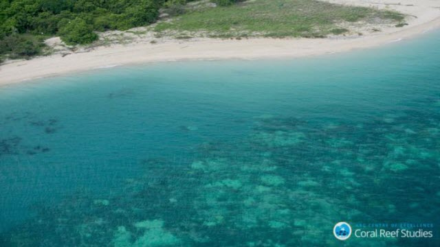 Widespread Bleaching is the New Norm for Corals of the GBR
