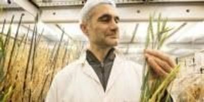 Speed Breeding Technique Sows Seeds of New Green Revolution