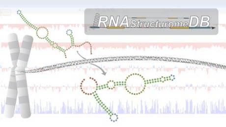New online database brings the genome into focus using molecular structure