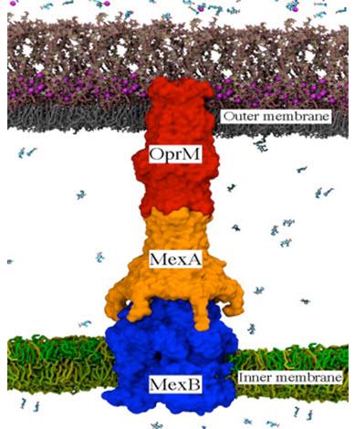 Bacterial efflux pumps
