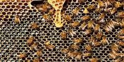 Correctly Used Neonicotinoid Pesticides Do Not Adversely Affect Honeybee Colonies
