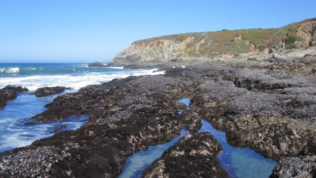 Mussel Beds at Low Tide
