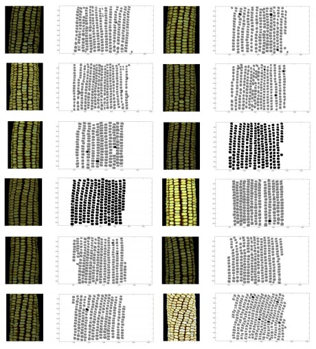 Corn Kernel Maps