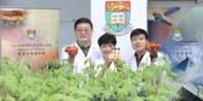 Researchers Generate Tomatoes with Enhanced Antioxidant Properties by Genetic Engineering