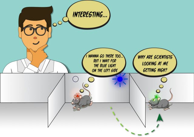 Amusing view of the mouse experiment