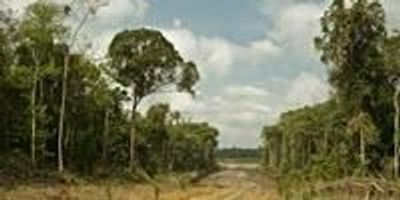 Study Says Climate Impact from Loss of Intact Tropical Forests Grossly Underreported
