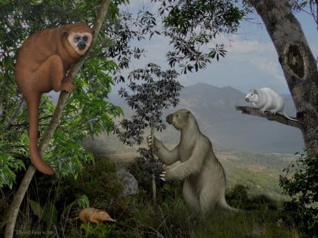 """lost world"" of Caribbean animals"