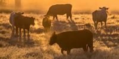 The Advent of 'Green' Cattle